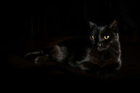 Black cat with yellow green eyes lies on a dark background, side light, copy space, selected focus, narrow depth of field