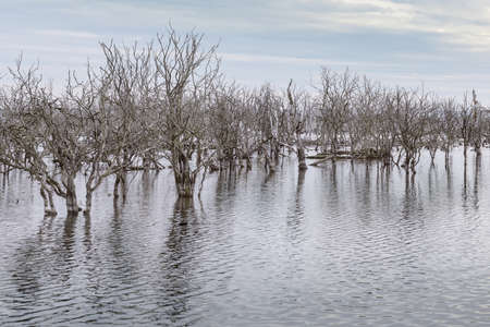 Dead trees in the water in the flooded area of the Galenbecker lake after ecological restoration and enlargement, natural reserve landscape in Mecklenburg-Vorpommern, northern Germany