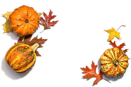 Squashes or food pumpkins and colored autumn leaves arranged on a white background with copy space in the middle, high angle view from above, selected focus