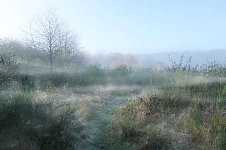 Rural meadow landscape with grasses, broom bushes and bare trees in the frosty morning mist, copy space, selected focus