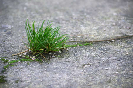 Power of nature, a tuft of grass is growing in a crack in the concrete, copy space, selected focus, narrow depth of field