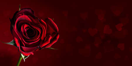 Red rose flower in the shape of a heart on a dark red background with copy space and bokeh hearts, romantic love symbol for valetines day, copy space, selected focus, narrow depth of field