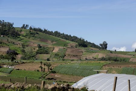 Rural landscape of vegetable agriculture fields in Guatemala Фото со стока