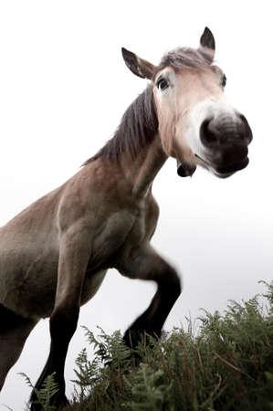mare: Trusting mare Stock Photo