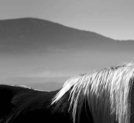 gleaming: horse with gleaming mane Stock Photo