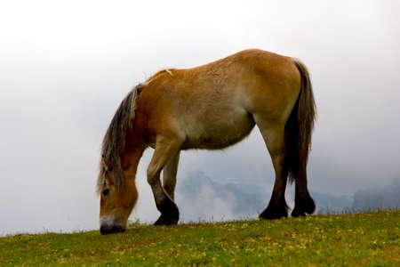 mare: Mare in meadows Stock Photo