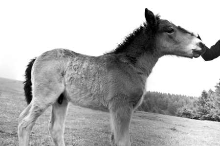 foal: A foal called Miracle