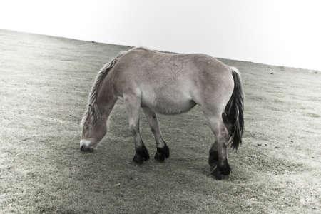 yegua: Mare, en prados Foto de archivo