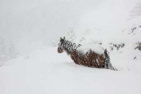 horse in snow: horse almost covered with snow in a very snowy landscape Stock Photo