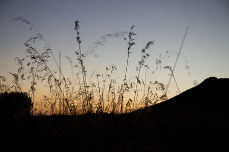 ove: Plant with blue sky at sunset ove the mountains Stock Photo
