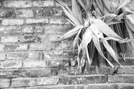briks: Rustic country theme. Detail of brik wall with corncobs (Black and White).