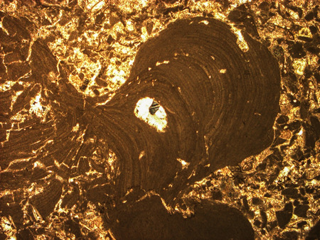 Micro-photo of geological thin section under cross-polarized light. (Limestone with red algae)