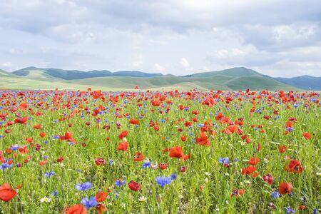 norcia: Castelluccio di Norcia, Umbria, Italy. The Countryside landscape of Pian Grande During the summer season.