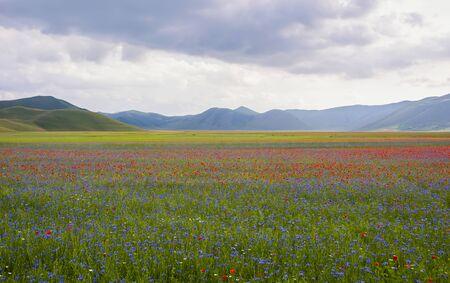 norcia: Castelluccio di Norcia, Umbria, Italy. Pian Grande During the season of flowering.