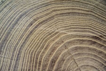 Abstract texture- Rings on the wood surface 写真素材