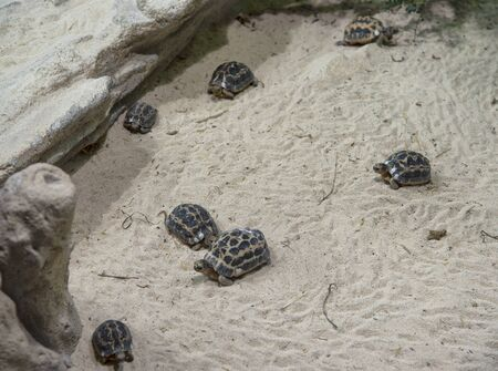 Terrestrial turtle colony on the sand