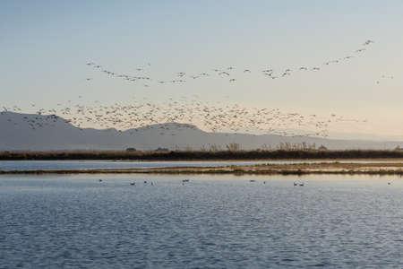 Bandada de pájaros al amanecer en el parque natural de la Albufera, Valencia, España