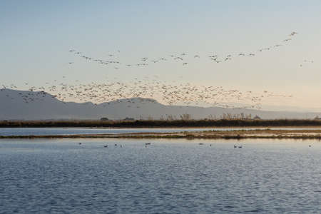 flock of birds at sunrise in the natural park of Albufera, Valencia, Spain 스톡 콘텐츠