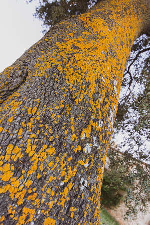 Close-up of the trunk of a tree with texture and yellow colors. Nature background Stock Photo