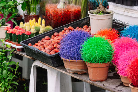 Garden center with lot potted small cactus plants sale. Pictures of a traditional fair. Stock fotó
