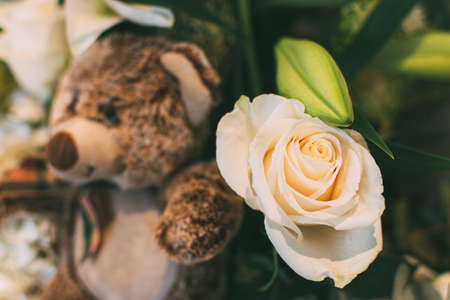 Cute teddy Bear toy with a fresh white rose. Background for valentine Day. Stock fotó