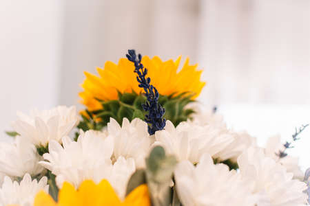 little blooming lavander and sunflower in a bouquet. White background Stock fotó