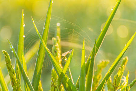 close up of a little dragonfly posing in the grass and a spider web background Stock fotó