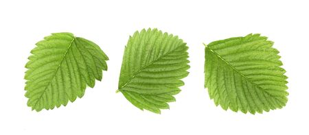 Green leaves strawberry isolated on white background