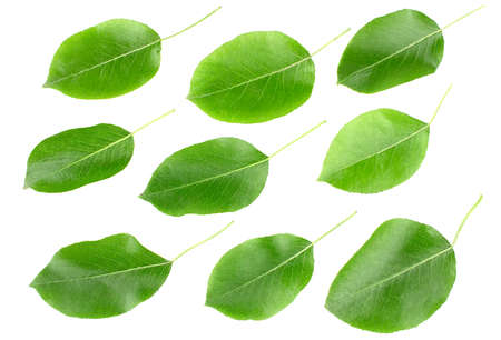 Green leaves pears isolated on a white background