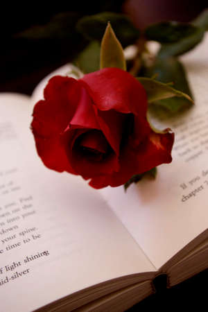 Red rose lying on a book