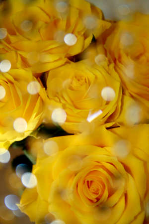Yellow roses with water droplets