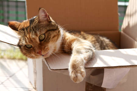 cat in a box 写真素材