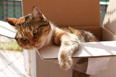 cat in a box Standard-Bild