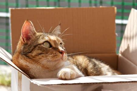 cat in a box photo