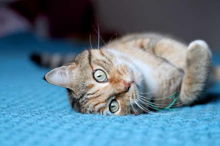 pet photography: cat