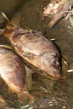 Concern for the Environment, Dead Fish, Pollution, Nature Stock Photo - 18097204