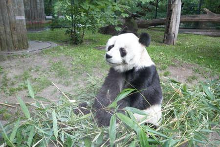 Berlin zoo Stok Fotoğraf