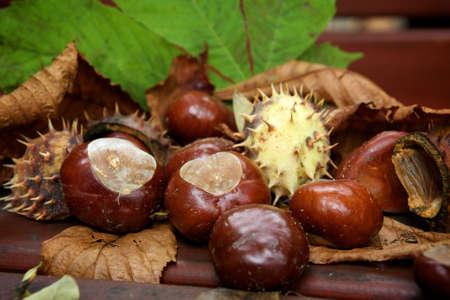 chestnut Stock Photo