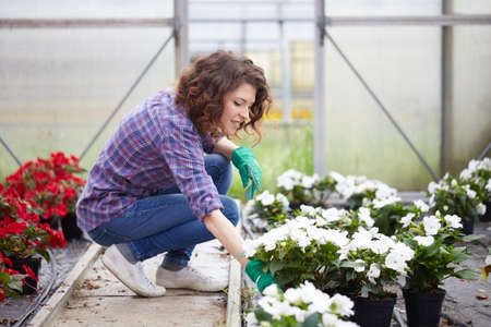 frock: Portrait of a young woman at work in greenhouse,