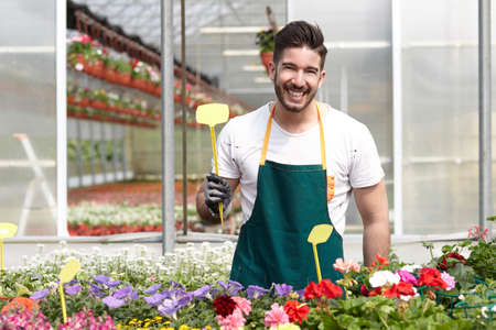scissors: happy male nursery worker trimming plants in greenhouse