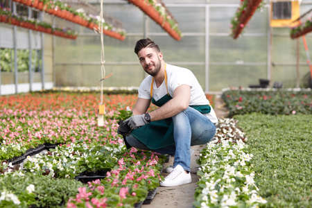 white trim: happy male nursery worker trimming plants in greenhouse