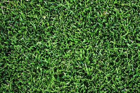 Grass background Stock Photo - 7042470