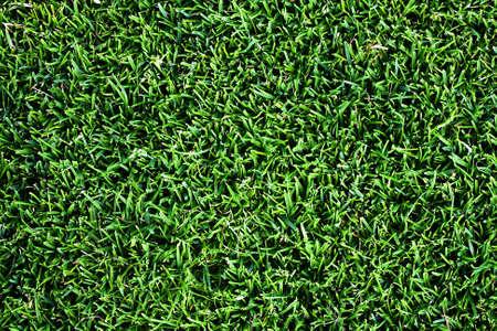 Grass background Stock Photo - 7042470