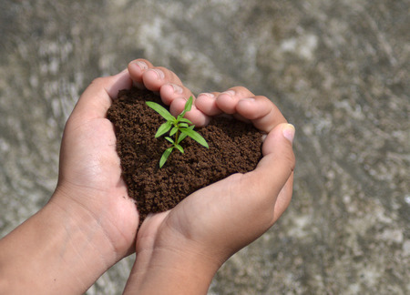 child protection: Sprout growing in love