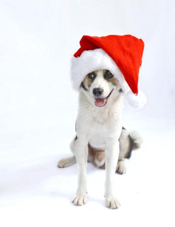 Mignon assis chien chiot de Noël - Santa hat