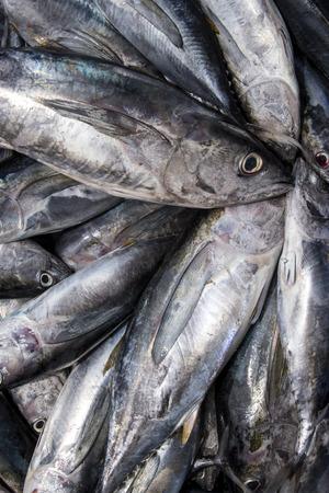 Le poisson du thon rouge de près