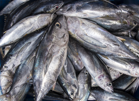 Bluefin Tuna Fish