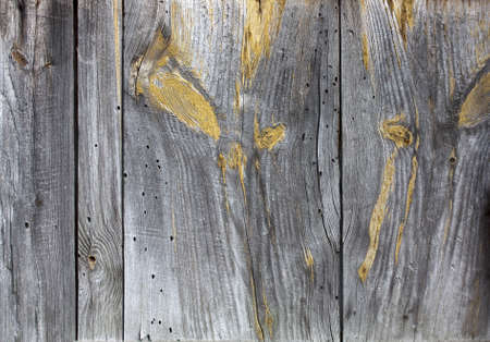 Background-old pine boards with resin protrusion Stock Photo