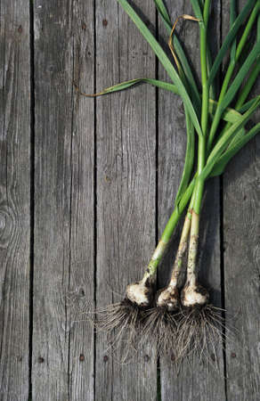 organic garlic on old wooden background photo