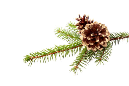 Christmas decoration - fir branch with gilded cones, isolation on a white background